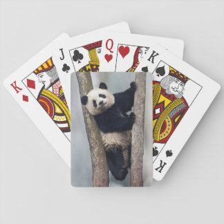 Young Panda climbing a tree, China Playing Cards