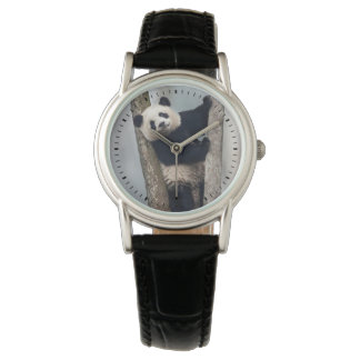 Young Panda climbing a tree, China Wristwatch