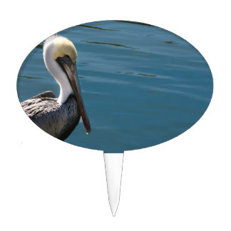 young pelican against water on left cake picks