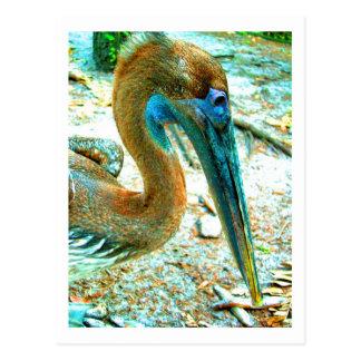 Young pelican head shot, high saturation color postcard