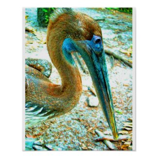Young pelican head shot, high saturation color posters