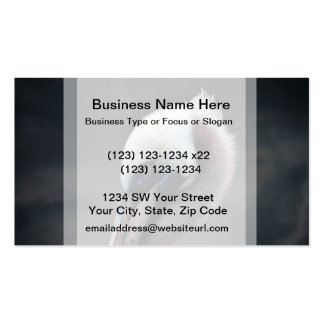 young pelican head view side bird business card