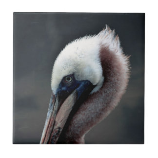 young pelican head view side bird small square tile
