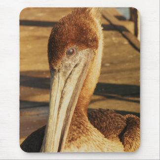 Young Pelican Mousepad