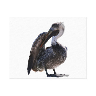 Young Pelican Preening cutout Canvas Print