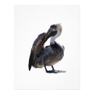 Young Pelican Preening cutout Full Color Flyer
