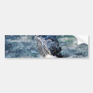 Young Peregrine Falcon Car Bumper Sticker