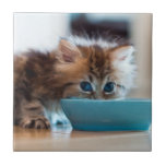 Young Persian kitten with blue eyes Ceramic Tiles