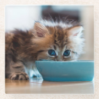 Young Persian kitten with blue eyes Glass Coaster