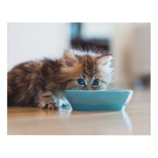 Young Persian kitten with blue eyes Panel Wall Art