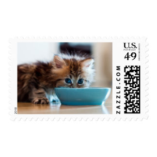Young Persian kitten with blue eyes Postage Stamp