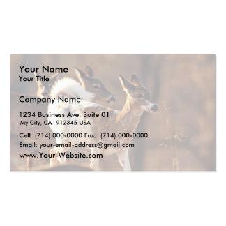 Young piebald deer business card templates