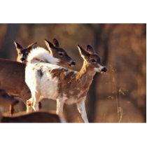 Young piebald deer statuette