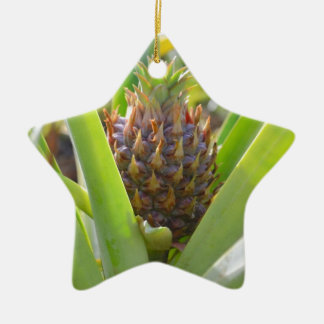 Young Pineapple Christmas Ornaments
