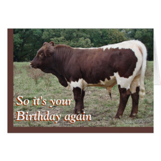 Young Pinzgauer Bull- customize any occasion Card