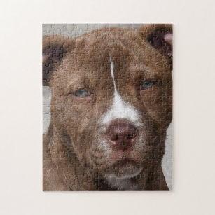 Young Pit Bull Gifts on Zazzle