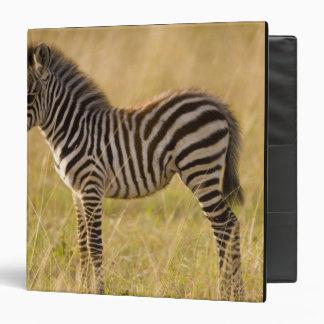 Young Plains Zebra Equus quagga) in grass, 3 Ring Binder