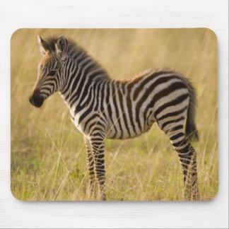 Young Plains Zebra Equus quagga) in grass, Mousepads