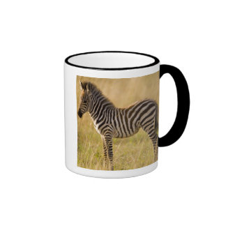 Young Plains Zebra Equus quagga) in grass, Mug
