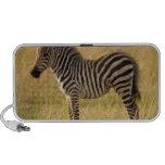 Young Plains Zebra Equus quagga) in grass, Mp3 Speaker