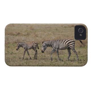 young Plains Zebra with mother, Equus quagga, iPhone 4 Case