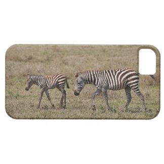 young Plains Zebra with mother, Equus quagga, iPhone SE/5/5s Case