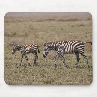 young Plains Zebra with mother, Equus quagga, Mouse Pad
