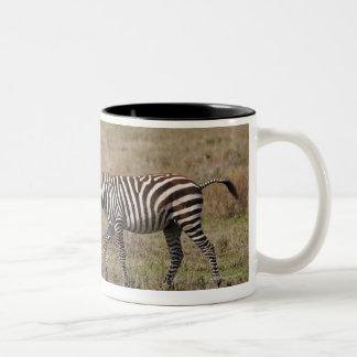 young Plains Zebra with mother, Equus quagga, Coffee Mugs