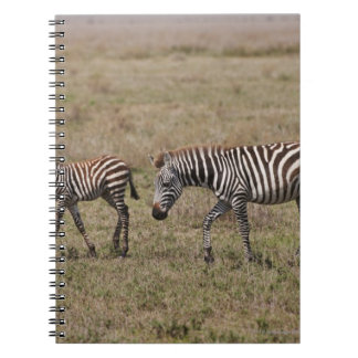 young Plains Zebra with mother, Equus quagga, Spiral Note Book