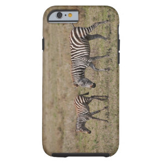 young Plains Zebra with mother, Equus quagga, Tough iPhone 6 Case