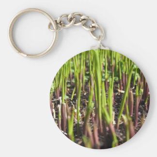 Young Plant Shoots Key Chain