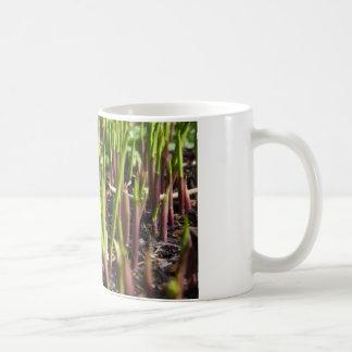 Young Plant Shoots Mug