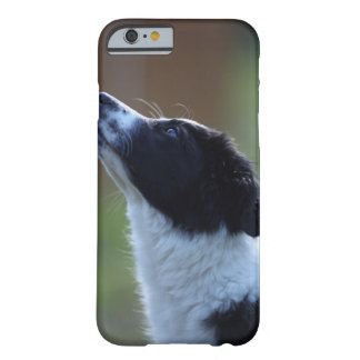 young pup Border Collie Barely There iPhone 6 Case