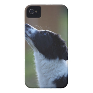 young pup Border Collie iPhone 4 Case-Mate Case