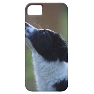 young pup Border Collie iPhone SE/5/5s Case
