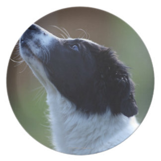 young pup Border Collie Melamine Plate