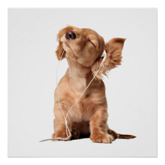 Young Puppy Listening to Music on Headphones Poster