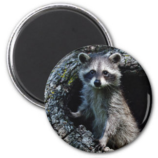 Young Raccoon 2 Inch Round Magnet