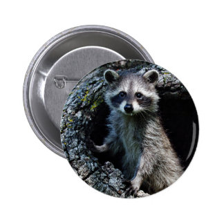 Young Raccoon Button