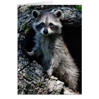 Young Raccoon Greeting Cards