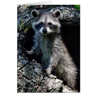 Young Raccoon Card