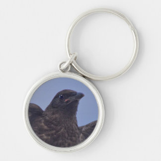 Young Raven on Quesnel Bridge w Sky Keychain