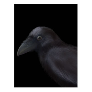 Young Raven Postcard