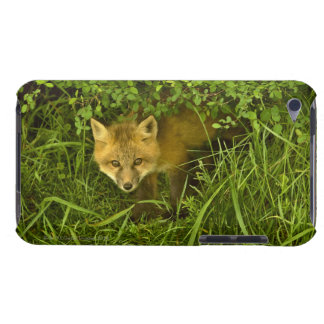 Young Red Fox coming out from hiding in bushes Barely There iPod Cover