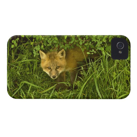 Young Red Fox coming out from hiding in bushes Case-Mate iPhone 4 Case