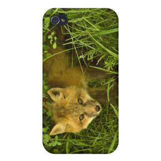 Young Red Fox coming out from hiding in bushes iPhone 4/4S Cases