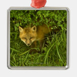 Young Red Fox coming out from hiding in bushes Metal Ornament
