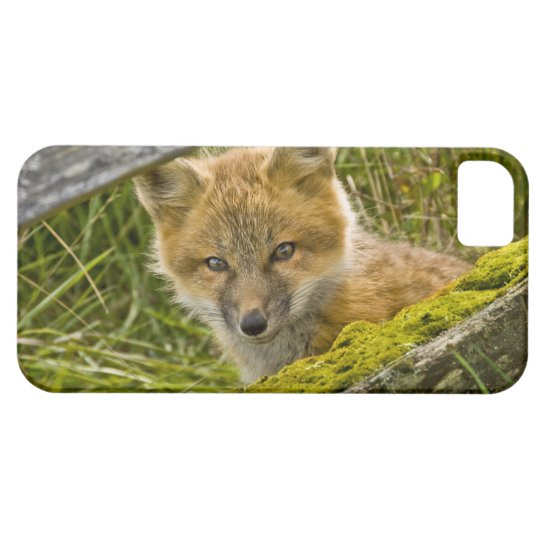 Young Red Fox looking through fence on San Juan iPhone SE/5/5s Case
