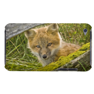 Young Red Fox looking through fence on San Juan iPod Touch Case-Mate Case