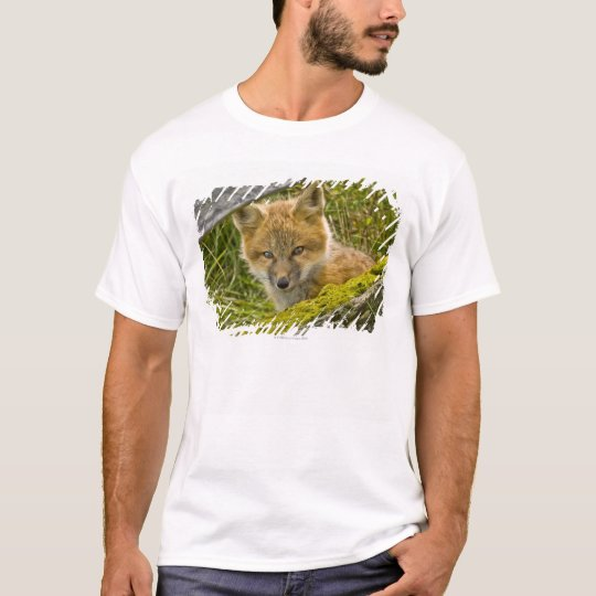 Young Red Fox looking through fence on San Juan T-Shirt